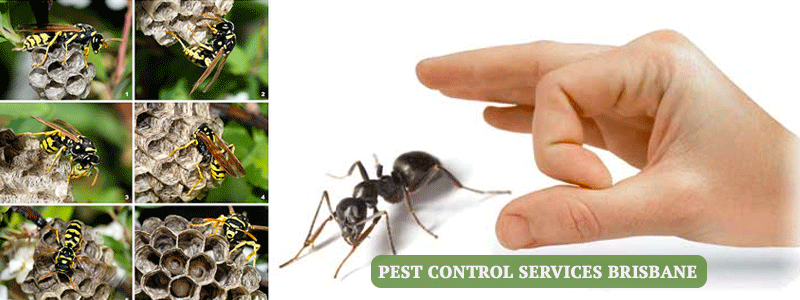 Pest Control Lower Mount Walker