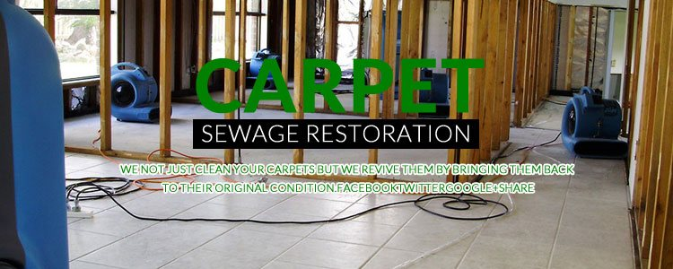 Carpet Sewage Restoration Brisbane