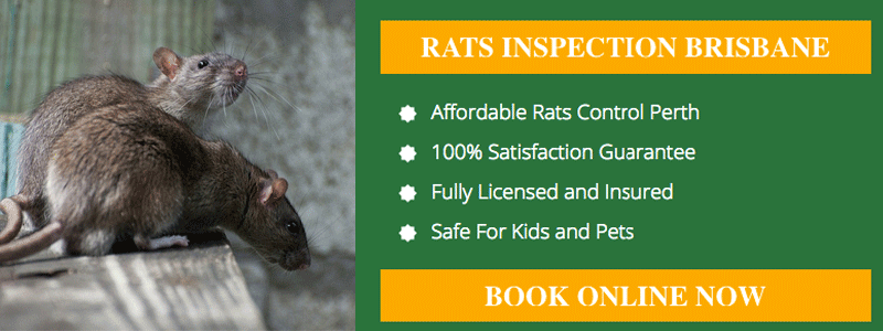 Pest Control Lower Cressbrook