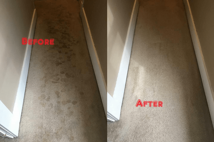 Awesome Carpet Steam Cleaning Blampied