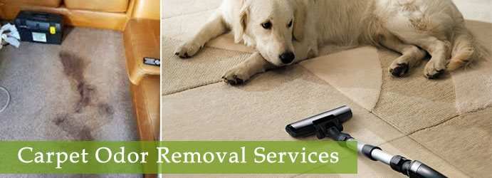 Carpet Odor Removal Services Logan