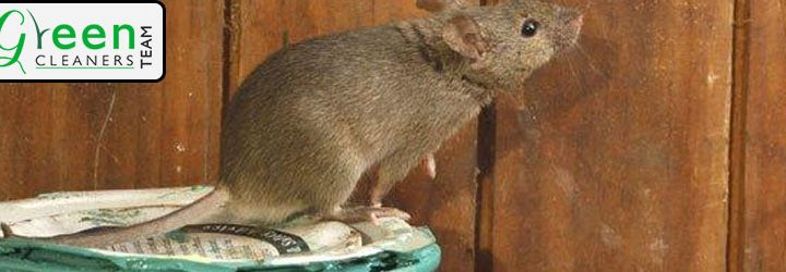 Protect Your Home from Rodents This Winter