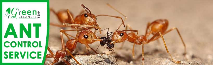 Ant Control Service Riverview