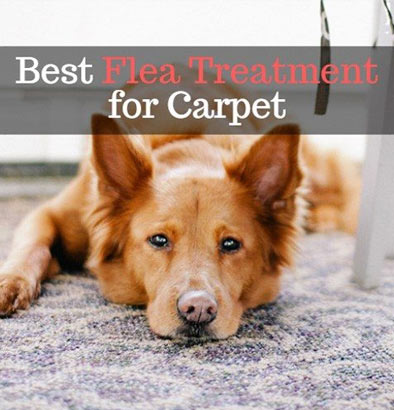 Best Flea Treatment