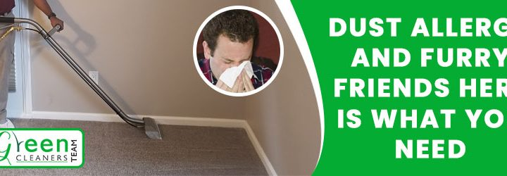 Dust Allergy and Furry Friends Here is What You Need