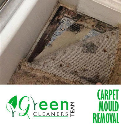 Carpet Mould Removal Pawleena