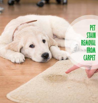 Pet Stain Removal Carpet Rhyndaston
