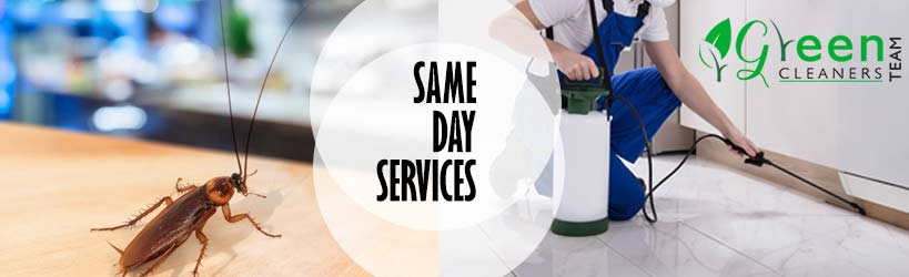 Same Day Pest Control Riverview