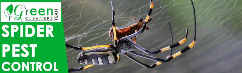 Spider Pest Control Colac West