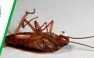 Cockroach Pest Control- Best Practices To Get Rid Of Roaches
