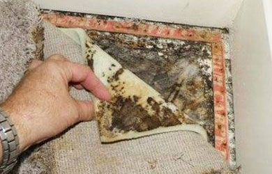 Carpet Mould Damage Removal
