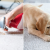 How Cat and Dog Urine are Bad for your Carpet